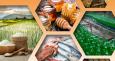 Участвайте в двустранните бизнес срещи на изложението Samsun Food Fair 2018